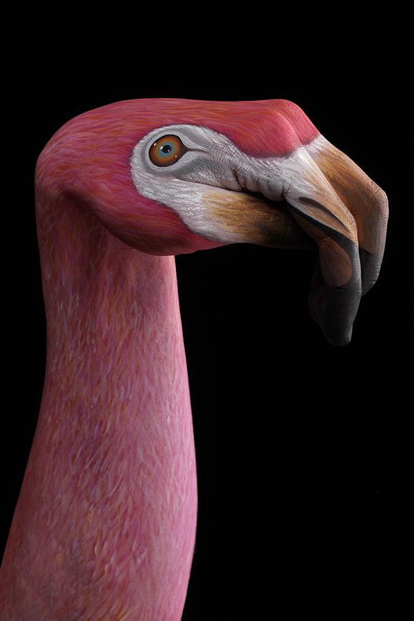 72-flamingo-on-black