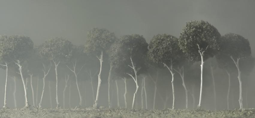 silvia CAMPORESI il bosco bianco 2012