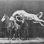 Eadweard Muybridge, pioniere della fotografia